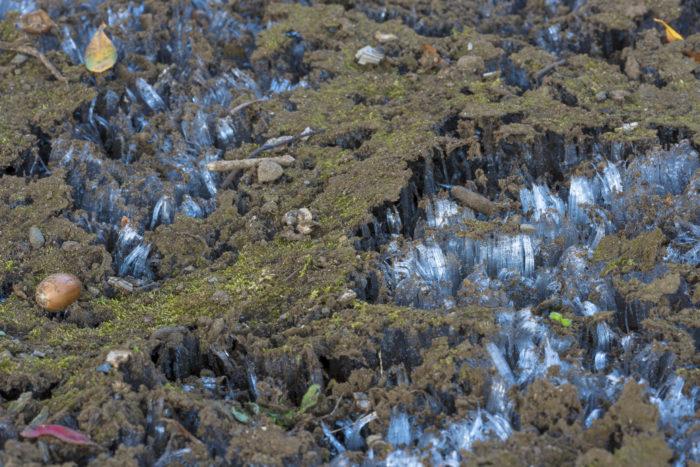 霜柱と苔とドングリ(横)